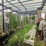 IIUM to work with 'Urban Hijau' to create sustainable garden